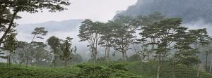 Excursiereis Sri Lanka