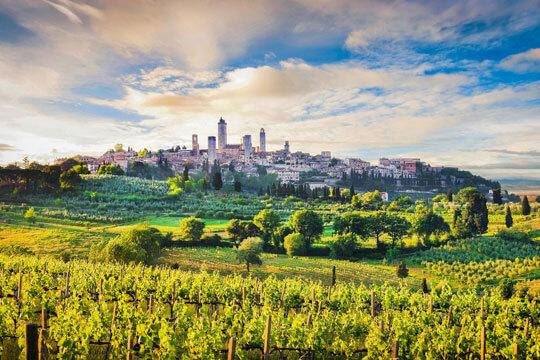 Toscane Wijnveld